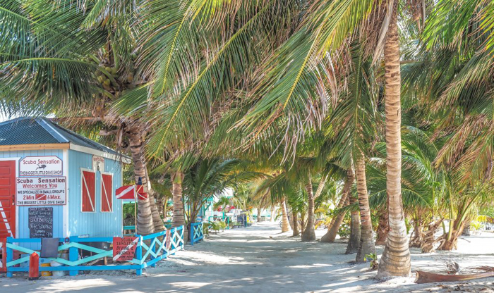 3 days in caye caulker, belize // palm trees