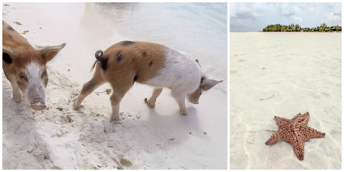 Do This, Not That // 2 Days in The Bahamas – MY WANDERLUSTY LIFE