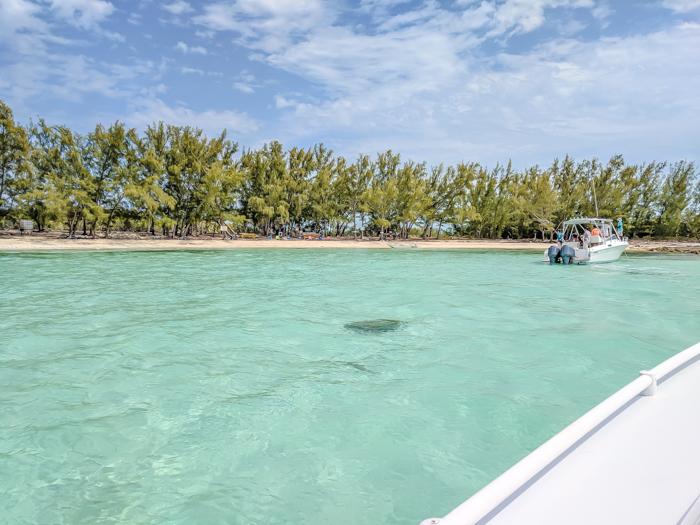 Do This, Not That // 2 Days in The Bahamas | Swimming with pigs in The Bahamas #swimmingwithpigs #thebahamas #bahamas #island #caribbean #honeymoon #beachvacation #turquoise
