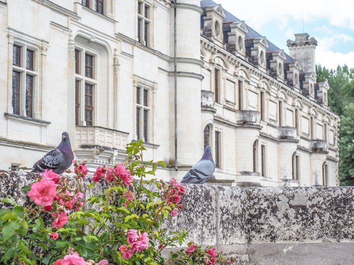 7 France-tastic Things to Do in the Loire Valley | #traveltips #loirevalley #france #daytrips | Chateau Chenonceau #chenonceau #chateau #castle #medici