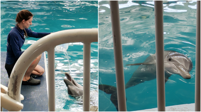 My 5 Favorite Ways I Spend a Weekend in Clearwater, Florida | Clearwater Marine Aquarium, Hope and Winter dolphins, a Dolphin's Tale #clearwater #florida #winter #dolphinstale #aquarium
