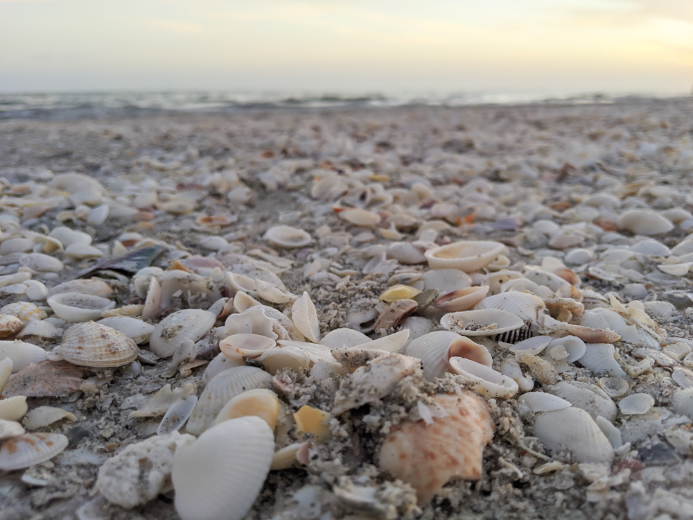 2 days in Fort Myers, Florida, a fun weekend itinerary: Sanibel island