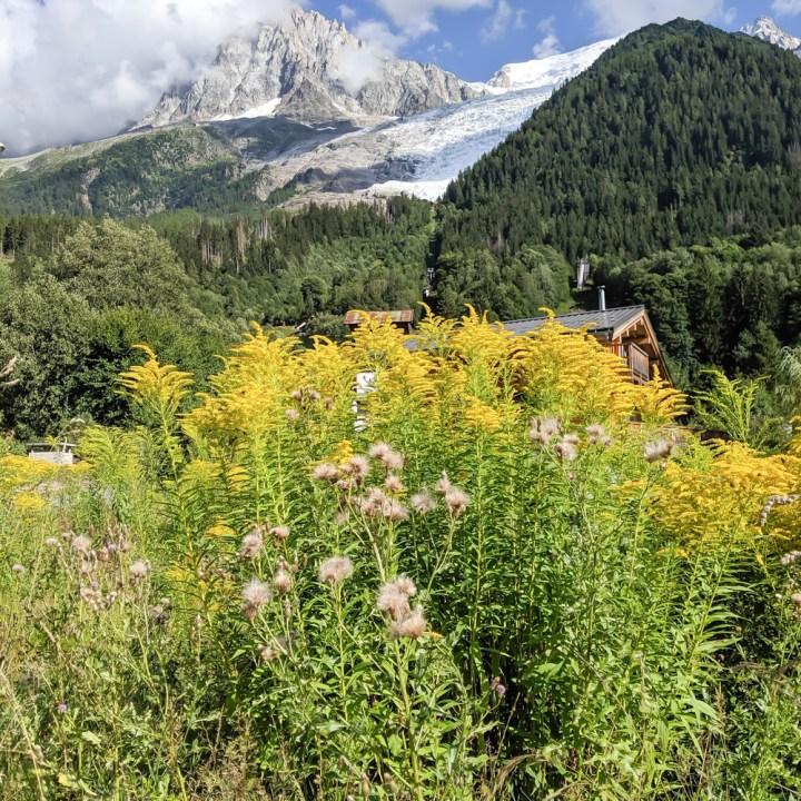 Awesome things to do in Chamonix in the summer: Alpine bucket list / wildflowers