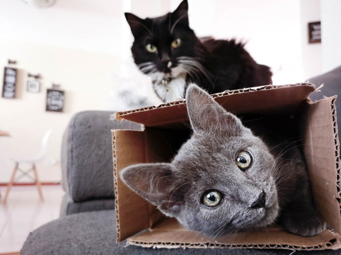 two cats playing in a cardboard box