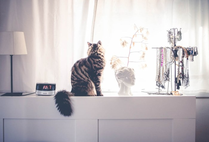 gray striped cat on a dresser with lots of jewelry and a lamp