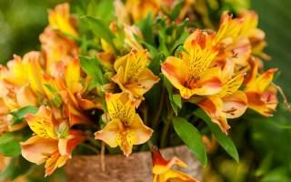 Fiore e Colore