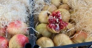 Cassetta da 9 kg di Melagrane varietà Squisità. Si tratta di una varietà dolcissima dal seme commestibile e molto tenero
