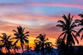 lola palmtree