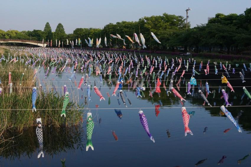 Record-breaking Number of Koi-no-bori flags in Tatebayashi (2015)