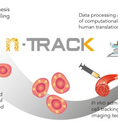 stem cells will be labelled with ntrack gold nano particles and fully characterised for uptake functionality and safety the labelled stem cells will be  [ 1366 x 768 Pixel ]