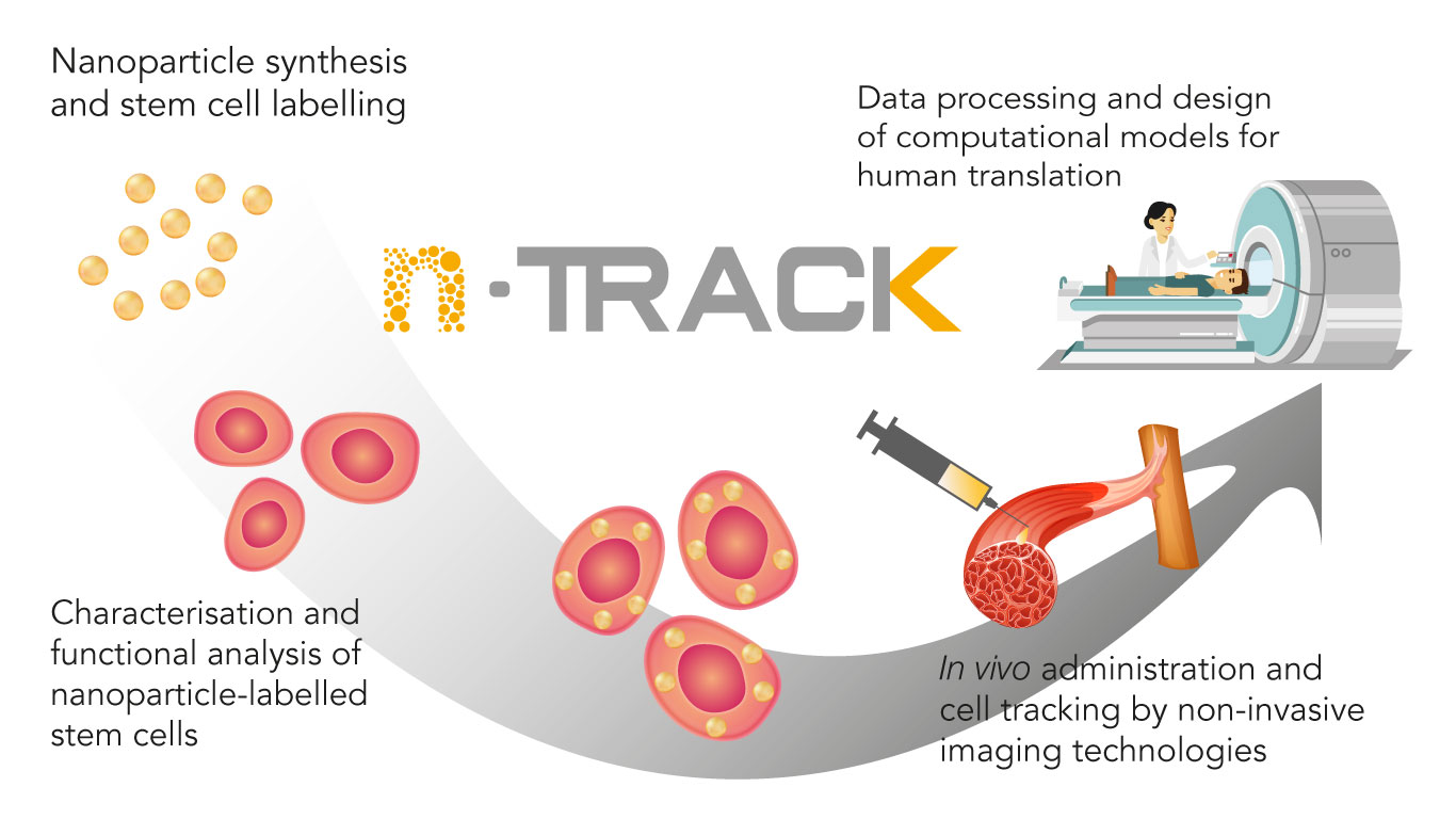 hight resolution of stem cells will be labelled with ntrack gold nano particles and fully characterised for uptake functionality and safety the labelled stem cells will be