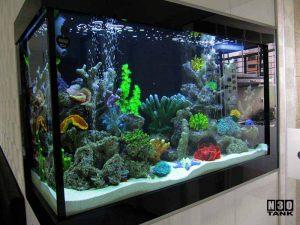 Aquarium Scaping Singapore  Aquascaping Service for Home