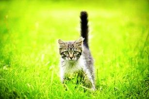 Grimmige Katze auf der Wiese