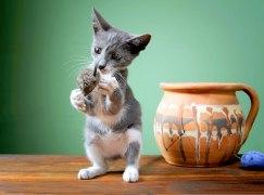 Katze macht Männchen und spielt mit Maus
