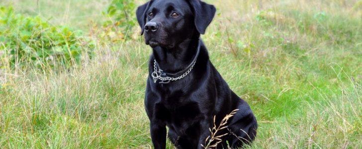 تفسير حلم الكلاب السوداء للعزباء نبأ فايف