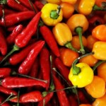 pimenta malagueta 2