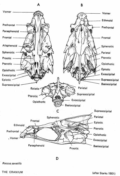 Osteology: General Information
