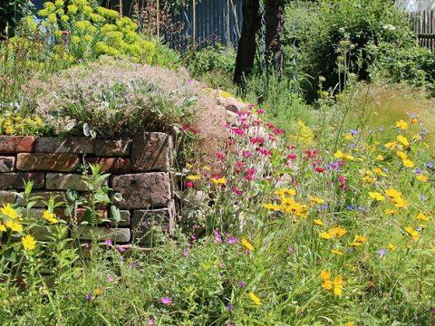 gartengestaltung natürlich grundlagen naturgarten - nabu