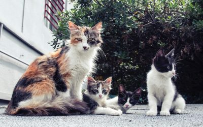 Cat and Kitten Intake During the COVID-19 Pandemic