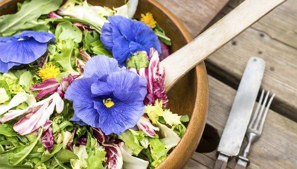 Essbare Blumen und Blten So wird es bunt auf Ihrem Teller