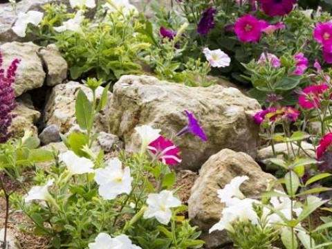 pflanzen für steingarten steingarten anlegen: anleitung und tipps für richtige steine