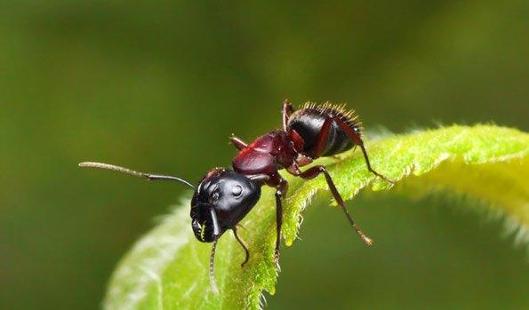 Hausmittel Gegen Ameisen Im Garten ameisen bek mpfen im