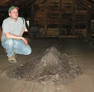 Large pile of bat guano