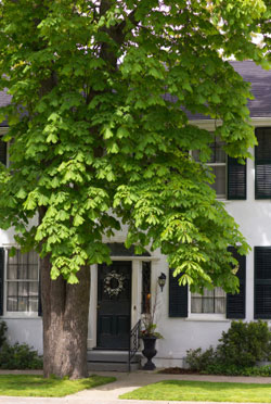 Shade trees lessen the need for air conditioning in summer