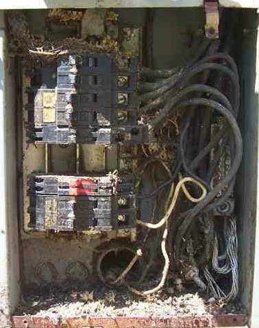 An unfortunate snake entered this serice panel and was electrocuted. The resulting mess may make the components defective.