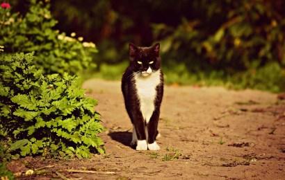 Vergehen Tierschutzgesetz – Schüsse auf Katzen in Postbauer-Heng