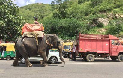 Elefanten ausgerissen