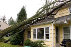 Temporary Emergency Solutions for Your Storm-Damaged Building