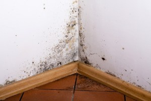 Where Does Black Mold Grow in a House?