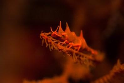 Andreas_Pluetzer_Dragon-Shrimp