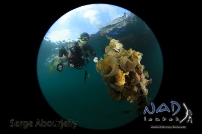 Photographer and Sargassum Frogfish