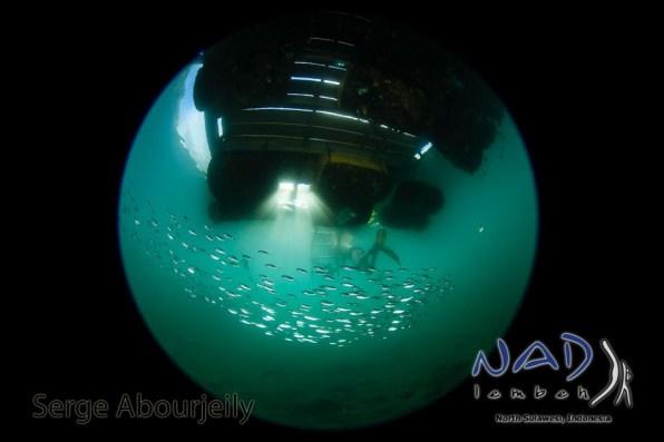 School of fish under NAD Lembeh Jetty