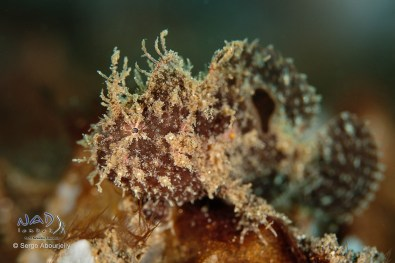 Tons of Frogfish this year