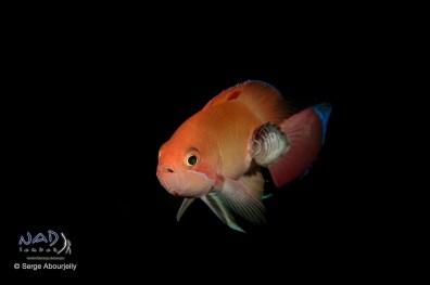 still love shooting reef fish ...