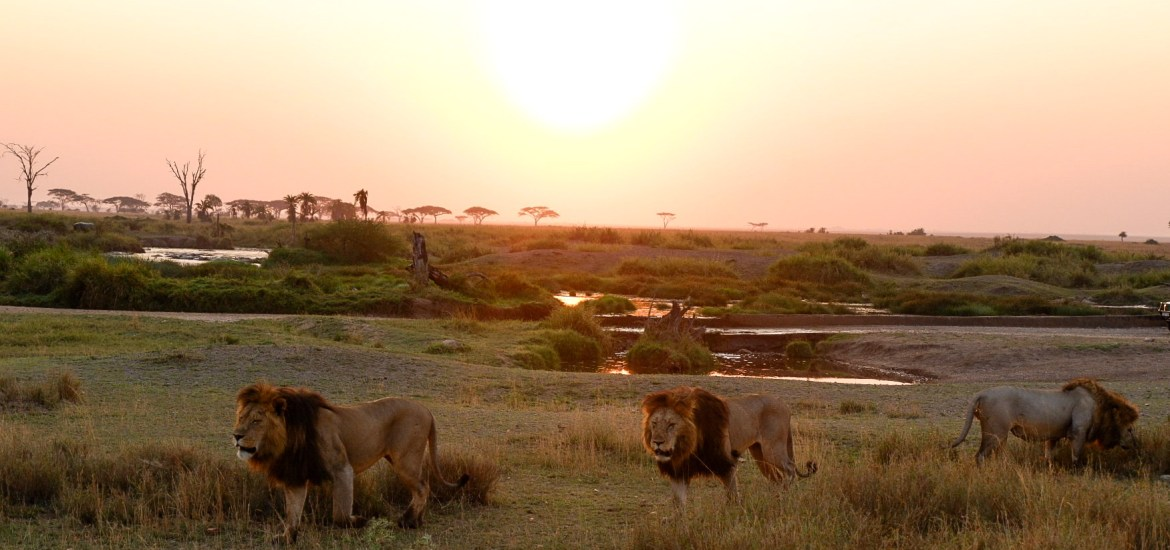 Tanzania; Wildlife at its Best - Nada Al Nahdi