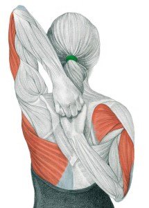 Mejora la Postura, Mejora tu Natación - Nada Facil