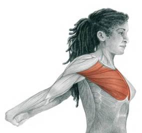 movilidad hombros