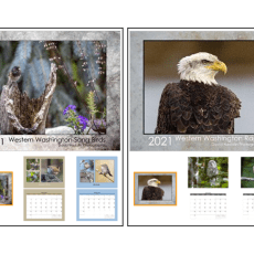 2021 calendars available!