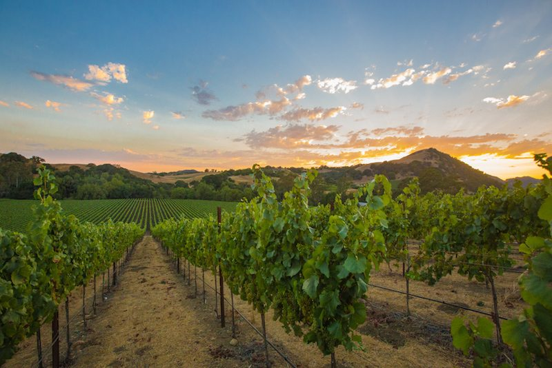 Sonoma-Valley-Spring-Events