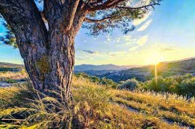 goldenes Zeitalter sonnenlicht an einem Baum unberührte Natur