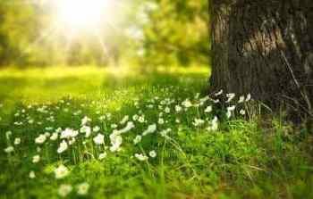 goldenes Zeitalter sonnenstrahl auf grüner wiese mit baum spirituelle Gemeinschaft