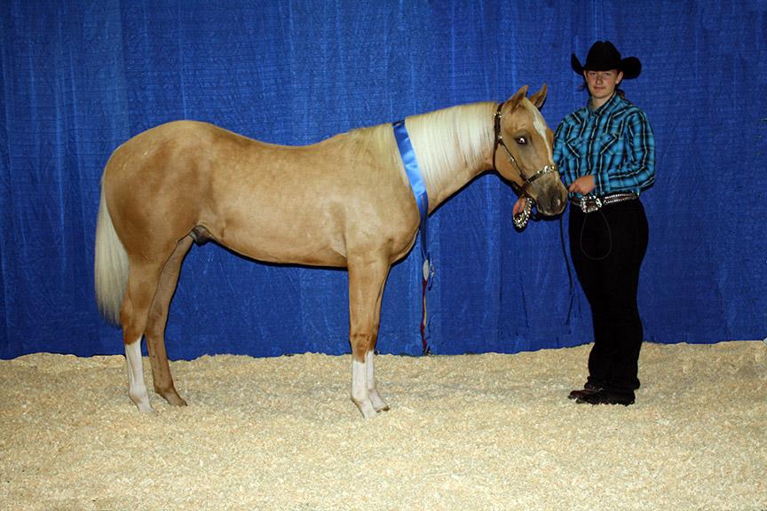 Naeric North American Equine Ranching Council Foals Pmu