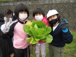 元気野菜2020 最終収穫