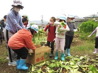 元気野菜づくり2021-5
