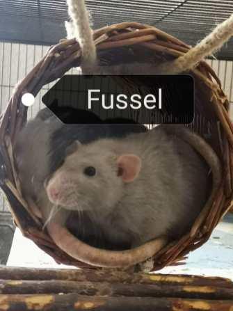 fussel