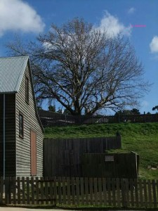 Soverign Hill, Ballarat - Sovereign Hill - A view